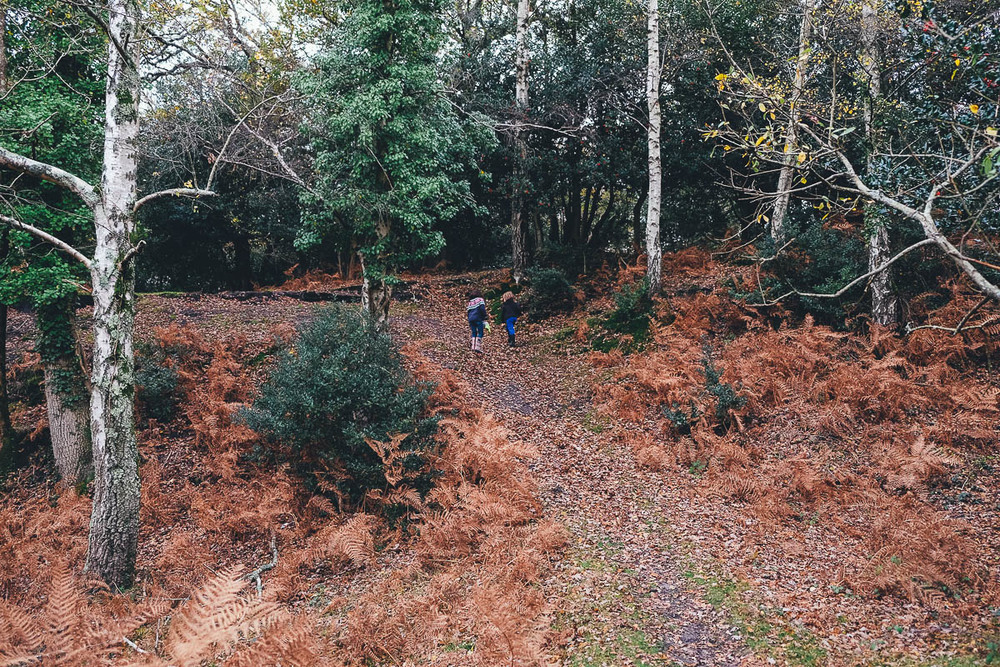 New Forest (1 of 1)-55.jpg