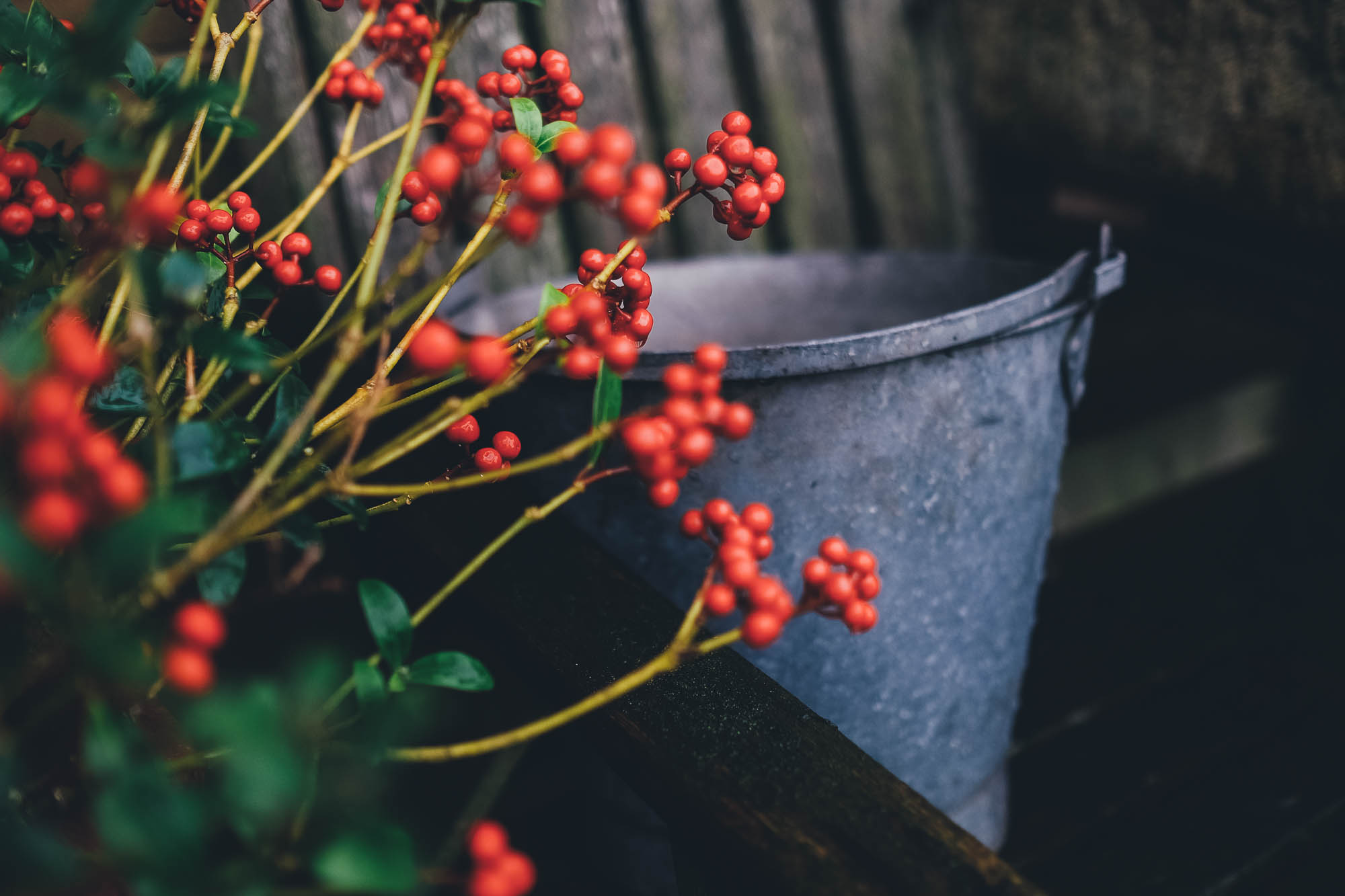 berries and buckets