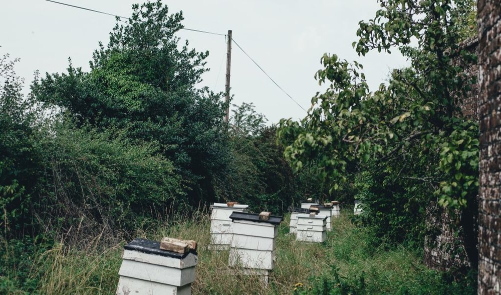 Deans Court - Honey & Harvest - #honeyandharvest