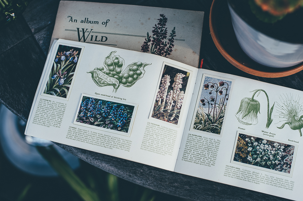 Vintage Garden Style - An Album of Wild Flowers, cigarette cards