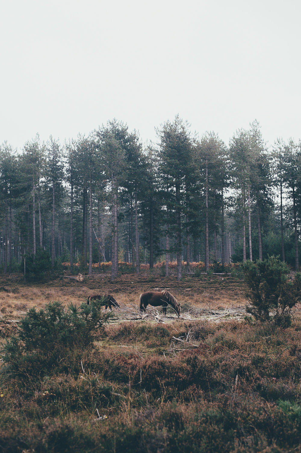 Dibden Inclosure, New Forest