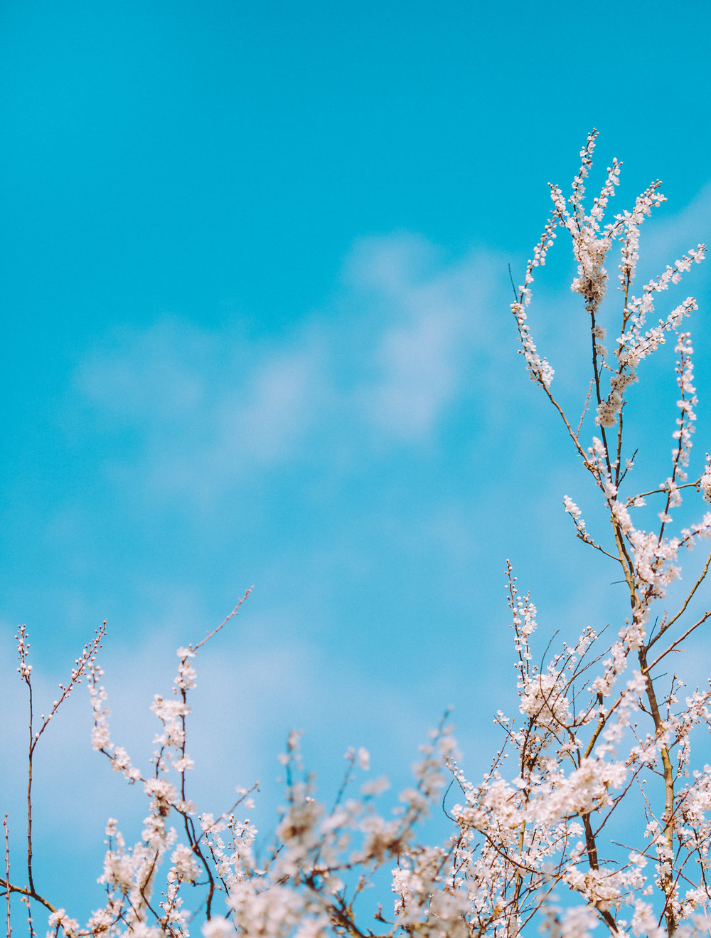 Blue skies and blossom
