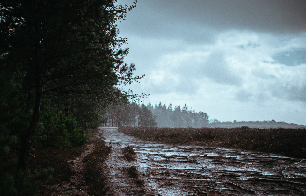 Rain in the New Forest, photo by Annie Spratt, mammasaurus.co.uk