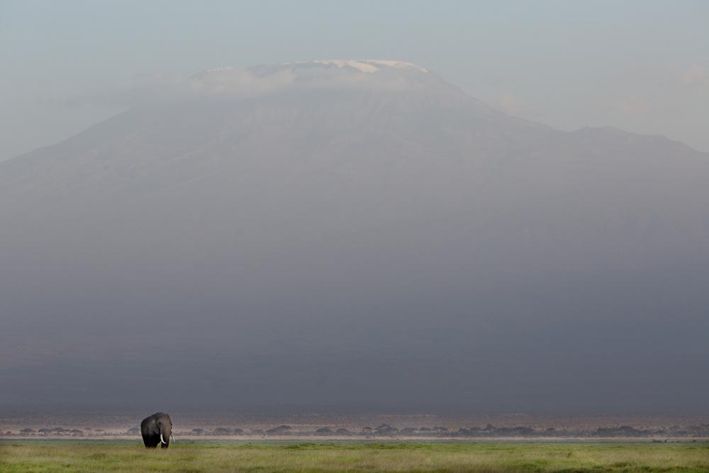 Elephant & Mt. Kilimanjaro - Amboseli