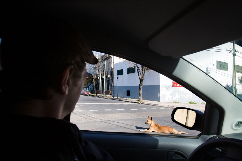 Stray dog -Buenos Aires