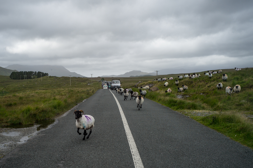 Renegade Rams, Connemara