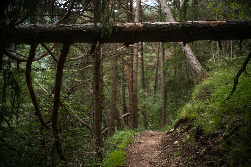 Trail near Valle di Cadore