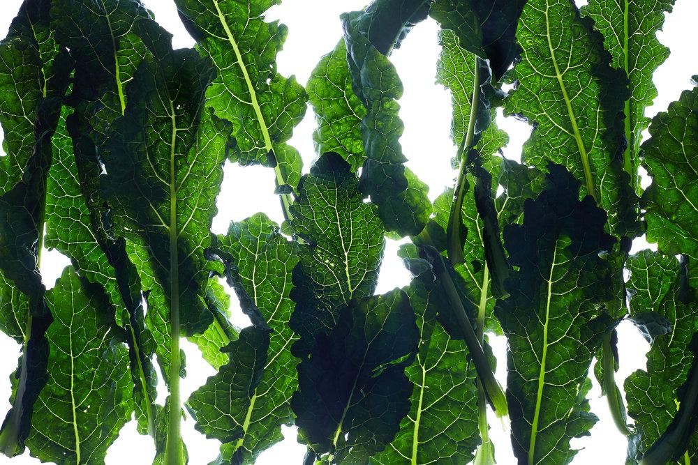 Translucent Kale