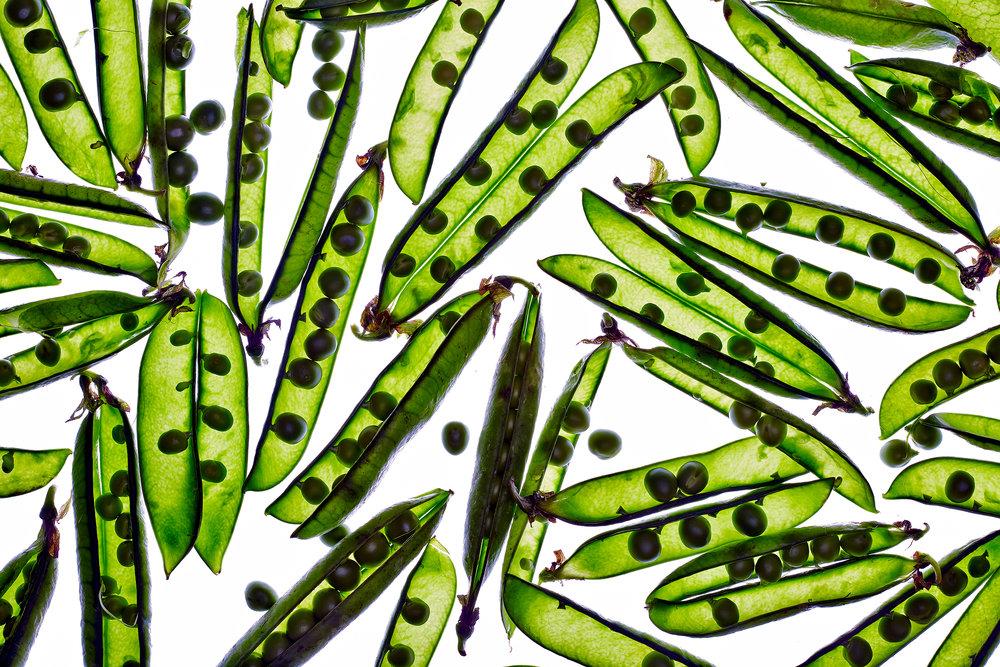 Translucent Peas in Pods