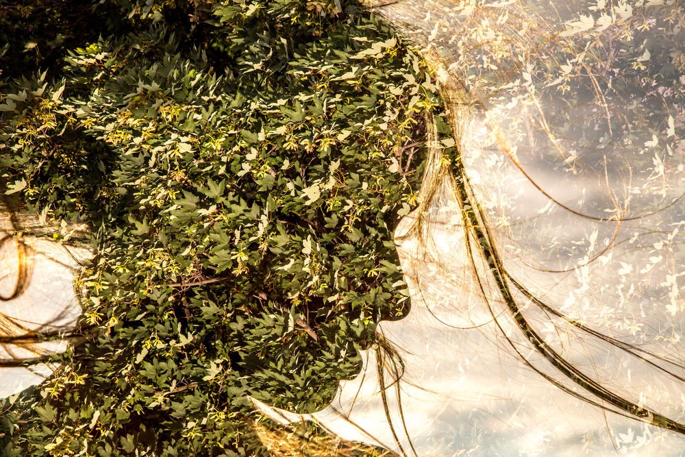 plant conc full res16.JPG