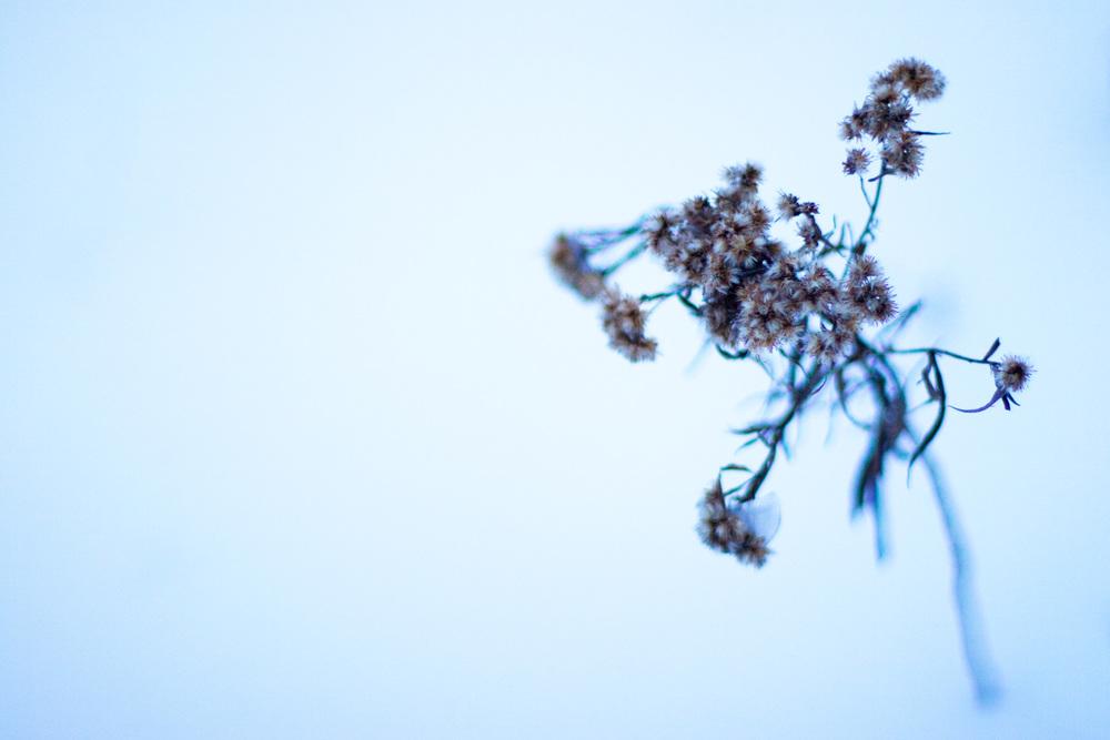 © 2014 Jeff Mikkelson