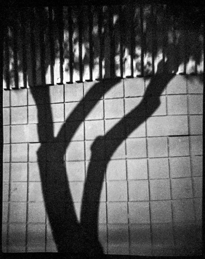 Shadow Tree