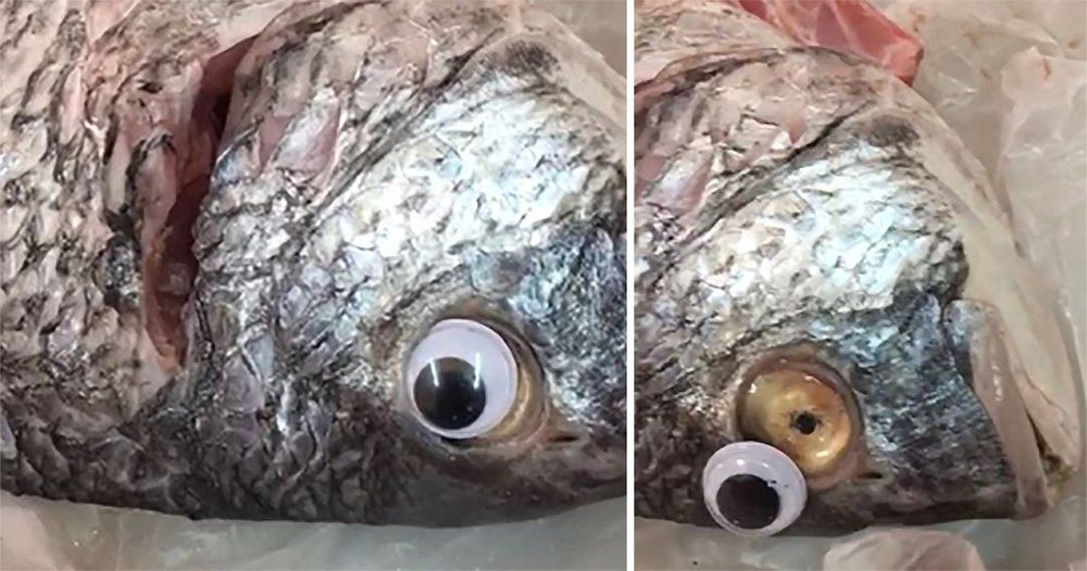 googly eye fish.jpg