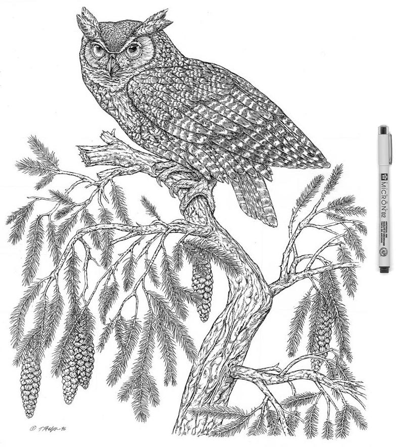 Great Horned Owl Micron.jpg