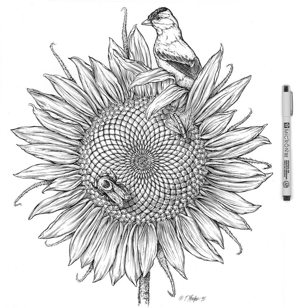 Sunflower Visitors Micron.jpg