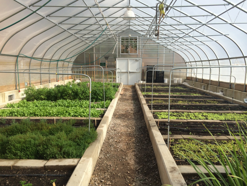Bailey Greenhouse and Urban Farm via Kelsey Allan