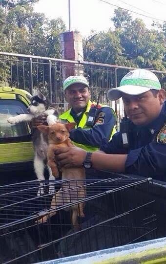 El día del rescate  * Imagen tomada de la Fan Page del Albergue Municipal de Mascotas