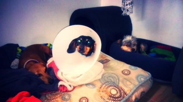 Keka en recuperación, acompañada de Balty y Tencho.