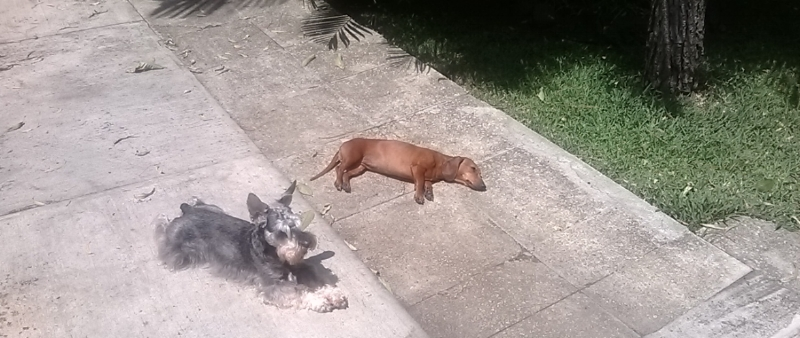 Joe y Balty, tomando el sol