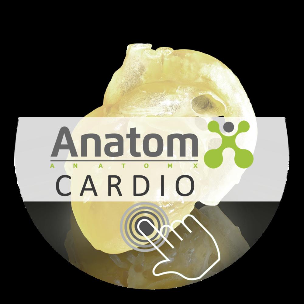 Button - Link zu AnatomX Cardio