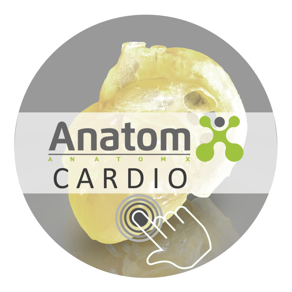 Button anatomX Cardio