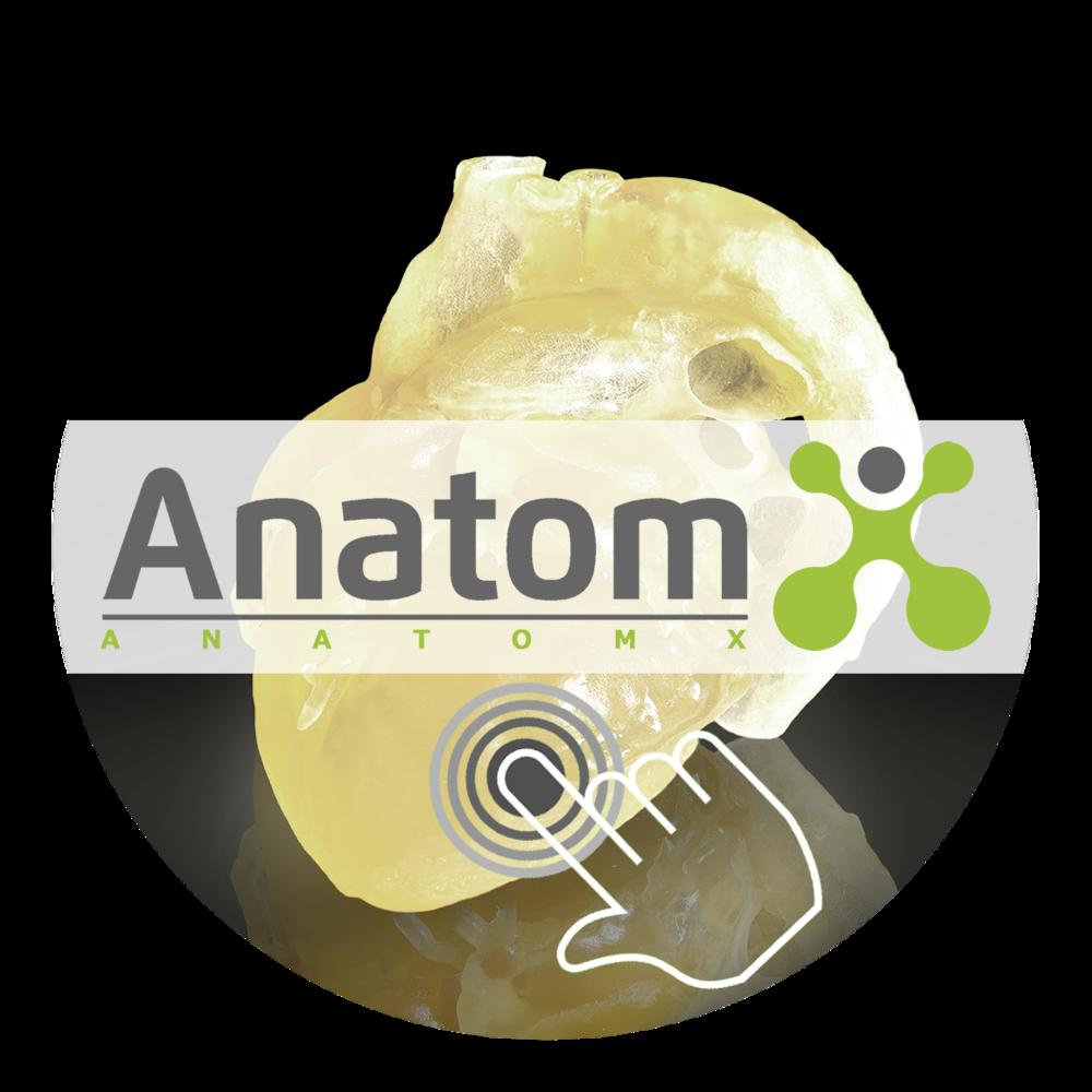 AnatomX MMM GmbH