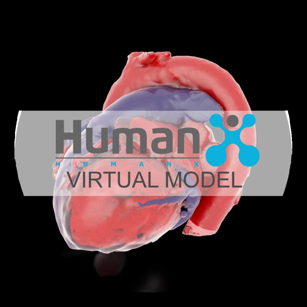 HumanX Virtual Model Button