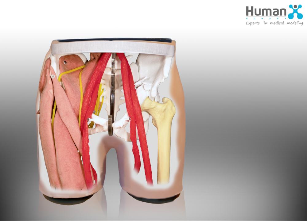 Surgical Lab zum 42. Berliner Chirurgentreffen Lebermodell