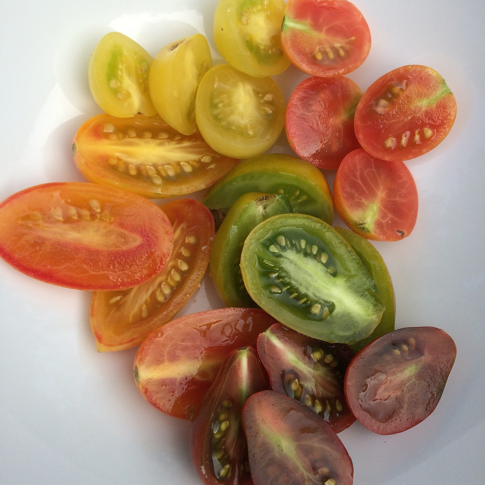 Clockwise from top: Lollipop tomato, Pink Bumblebee tomato, Green Pear tomato, Chocolate Pear tomato, Blush tomato