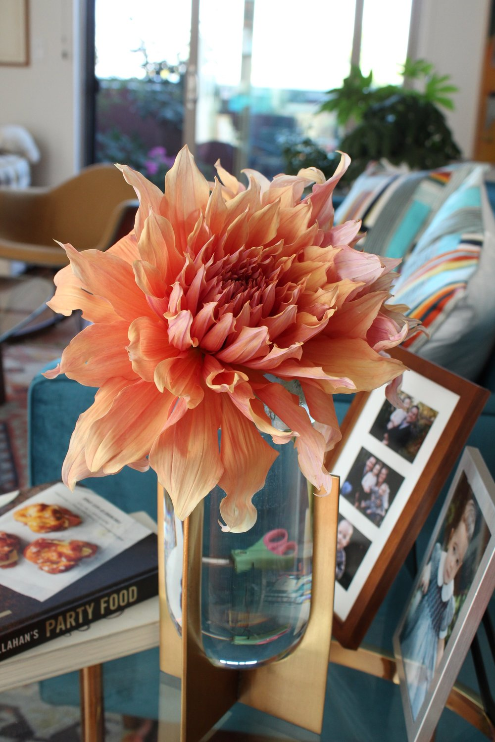 Sherwood Peach dahlia
