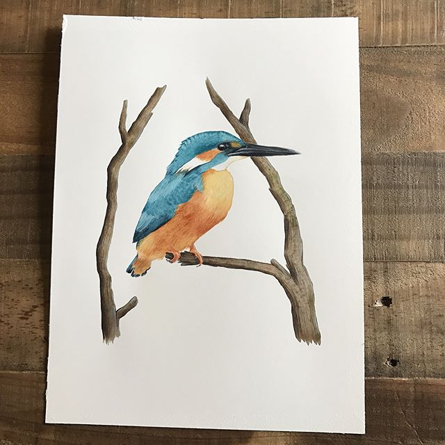 Finished this watercolor kingfisher and getting ready to test prints. I'm sharing some process from drawing to finished painting - sorry for bad lighting! This should be up in shop by tonight. #wildlifeart #birdart