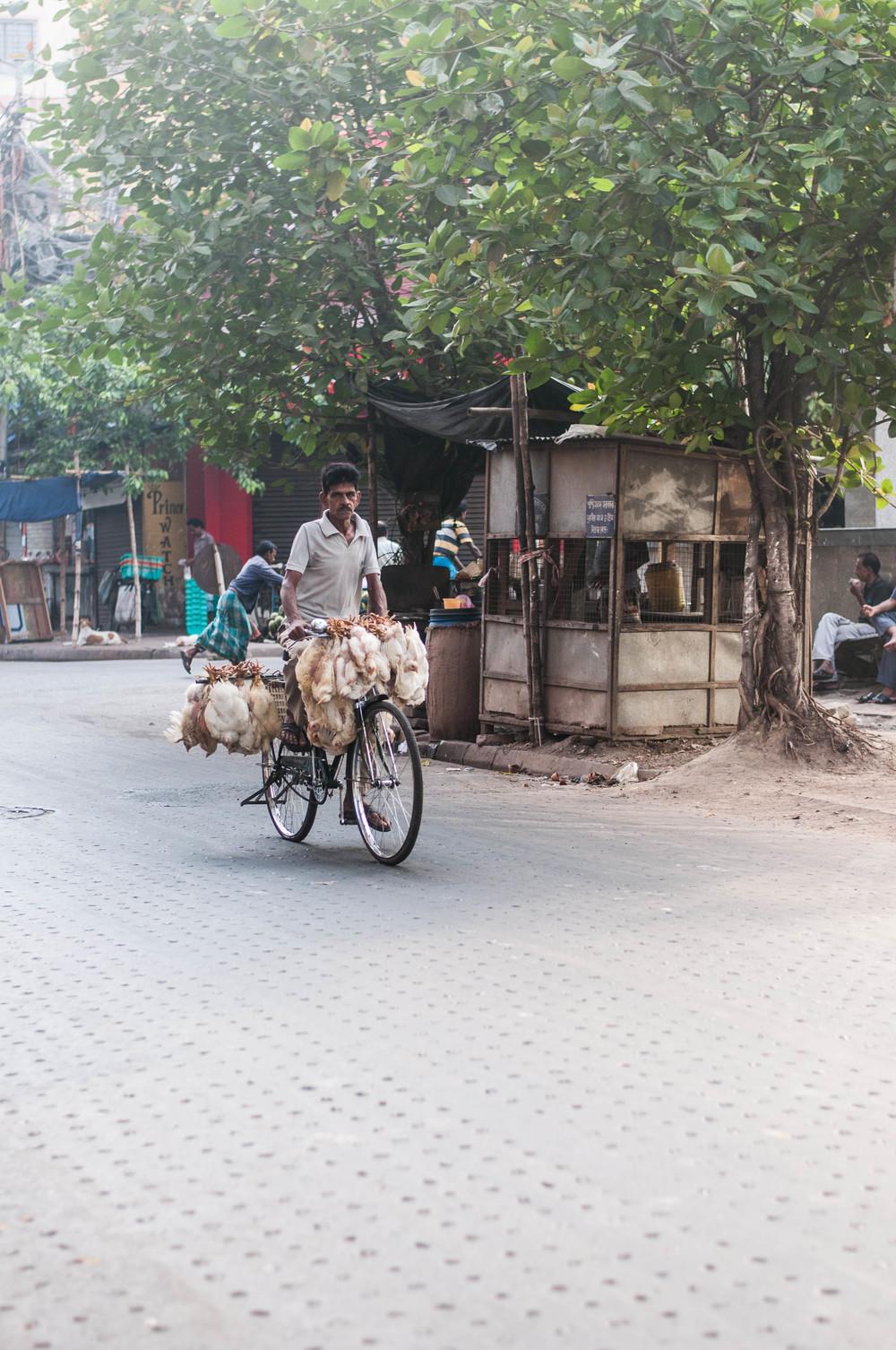 India11.jpg