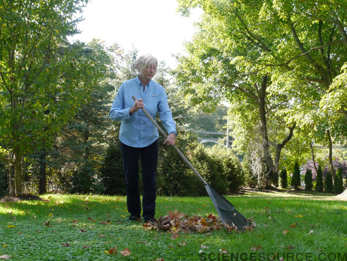 Senior Woman Raking