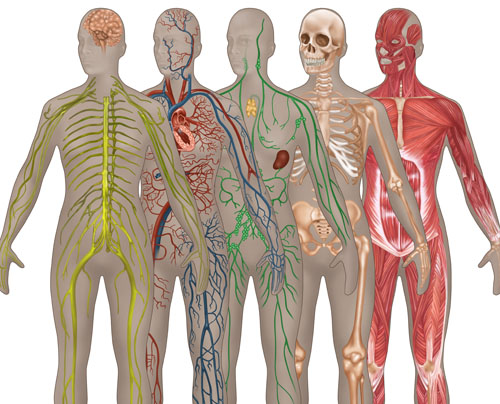 Female Body Systems