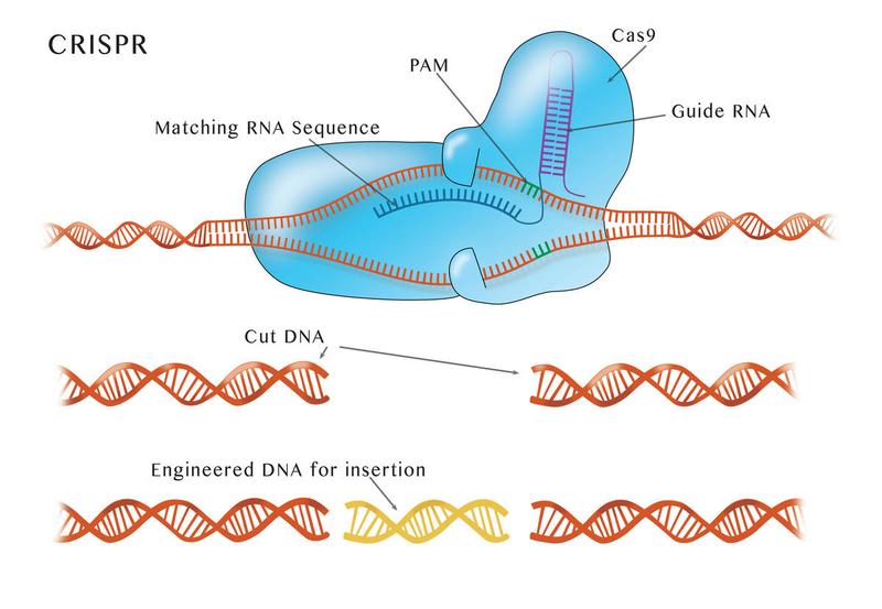 CRISPR protein