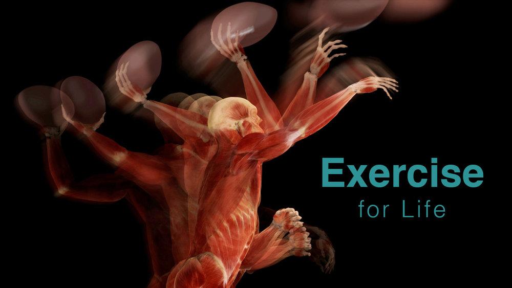 Exercise-Sports-Anatomy.jpg