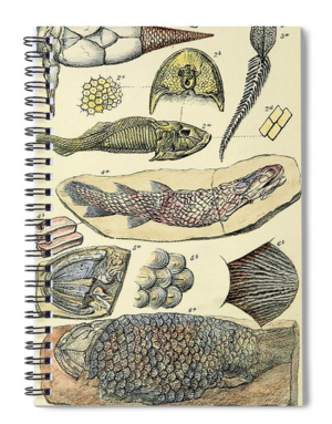 Fossil note books, mugs, and more!