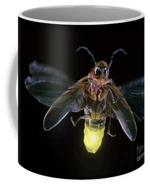 Insect mugs, prints and more!