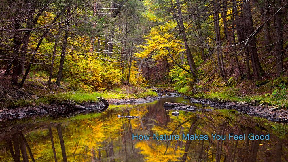 Raymondskill Creek flows through a hemlock ravine forest, Delaware Water Gap, Pennsylvania.