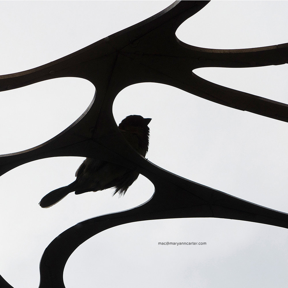 Bird on Sculpture