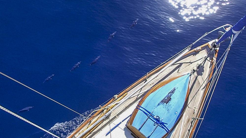 duncan-mckenzie-sailing-accompanied-tuna-school_L.jpg
