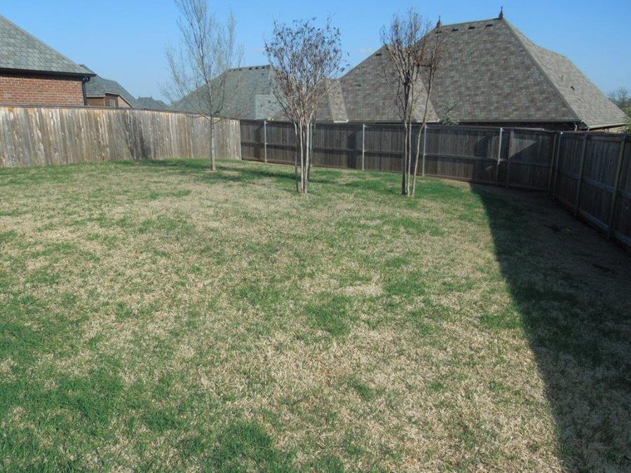 Backyard(1).jpg