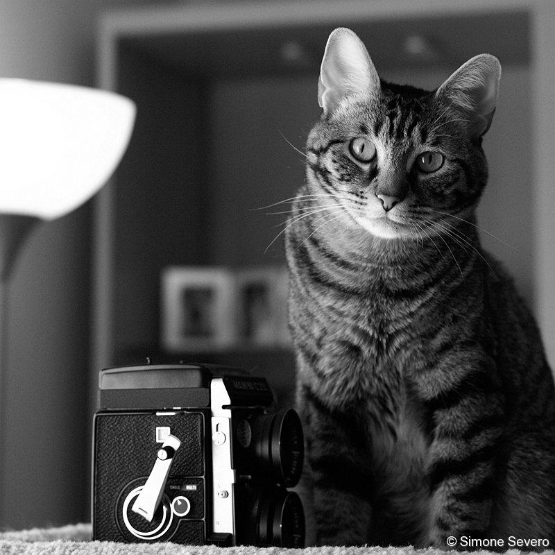 catphotographer.jpg