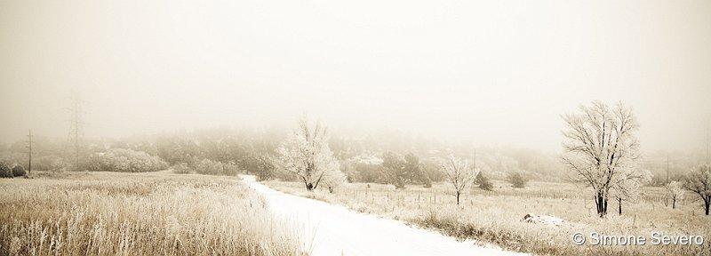 frozenpark.jpg