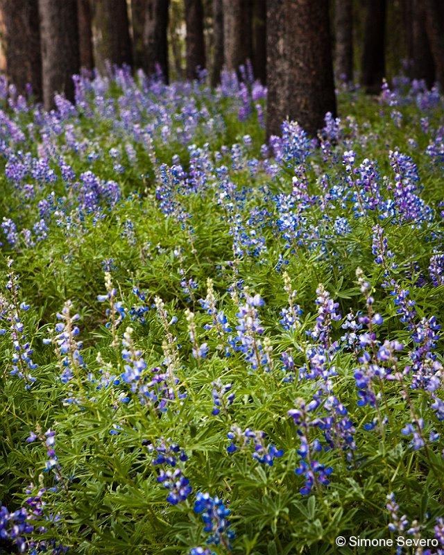 purplewildflowers.jpg
