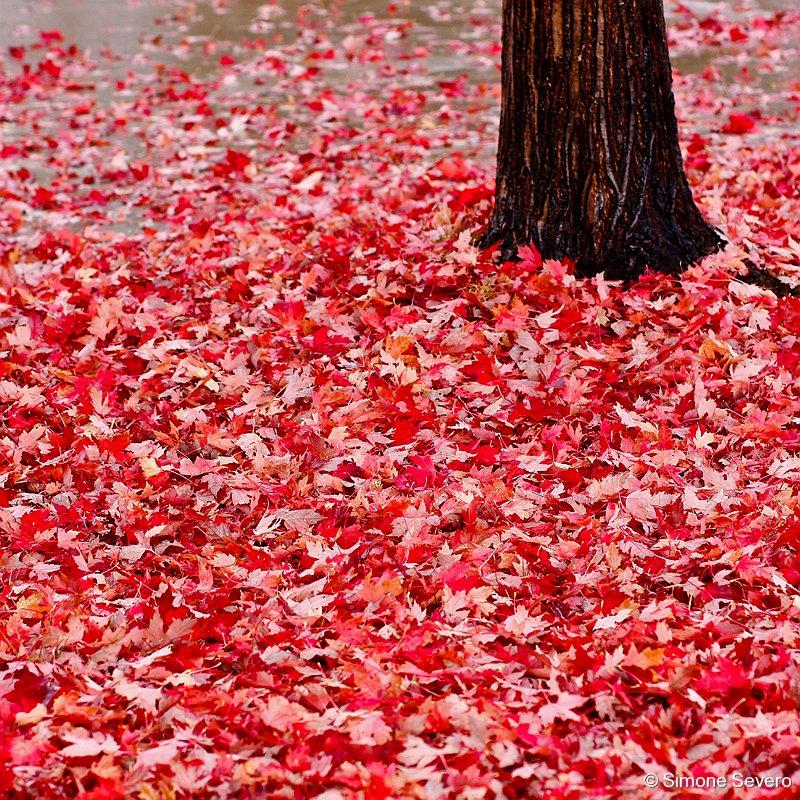 redfallcolor.jpg