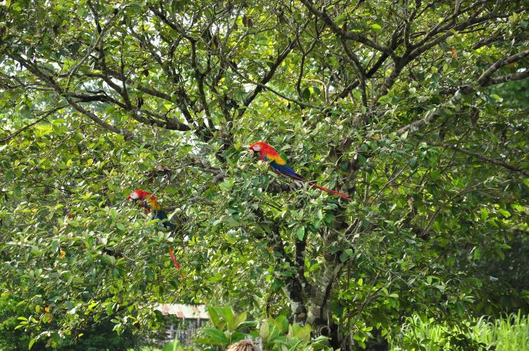 Lapa Rios, Costa Rica 2014