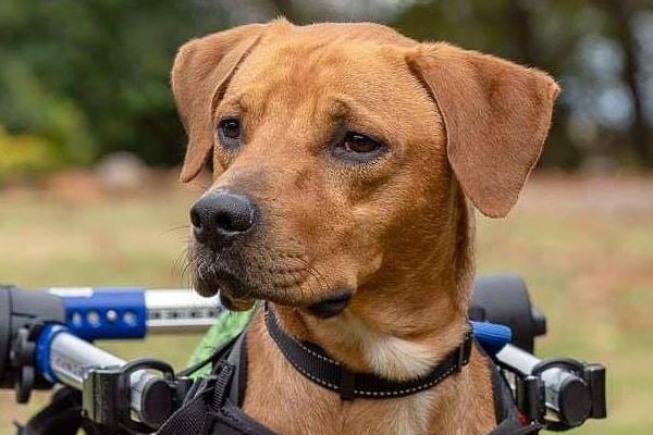 Gabriel  Began sponsoring: Dec 2018 - Veterinary Services