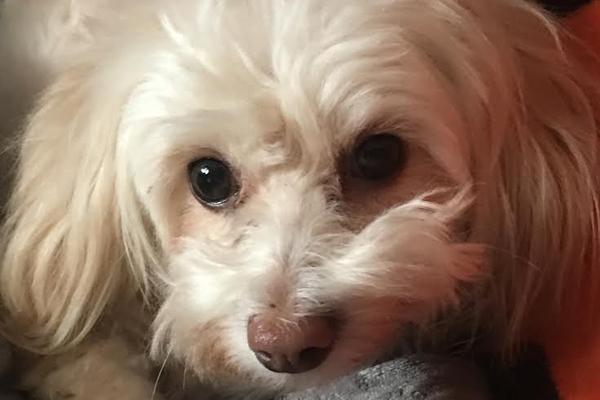 Madison  Began sponsoring: Dec 2018 - Rehabilitation Care - Veterinary Services