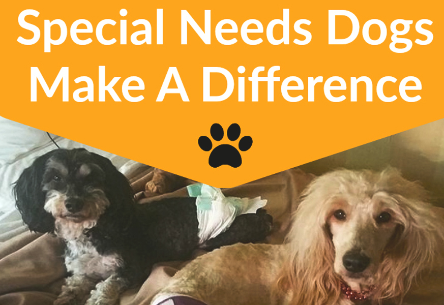September 2016  Talent Hounds   Inspiring Pair of Special Needs Dogs